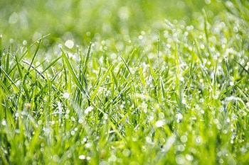 long grass closeup