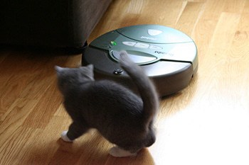cat playing with robotic vacuum cleaner